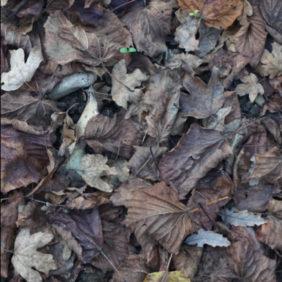 Poemas mohosos I : Sobre Lynn Margulis y fluir lechoso